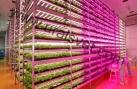 Светодиодная ферма по производству зелени